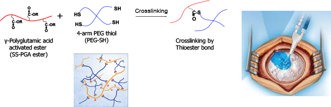 In situ crosslinking,수술용 실란트 application
